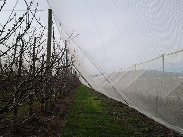 Bringing out the netting in spring