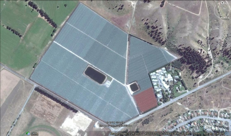 40ha of Cherries protected by NZ canopies - Bird netting and frost netting
