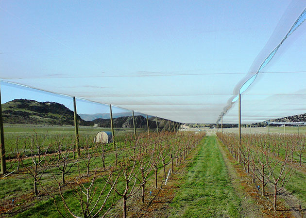 Pulling out netting over high value crops
