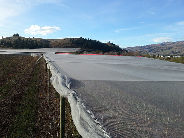 NZ Canopies pulling out crop protection netting