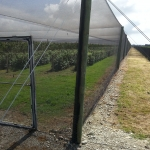 Raspberries are protected from frost and birds by NZ Canopies Netting